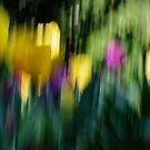 Tulips with movement by SandycPhotos