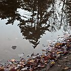 Reflection of Trees by BialySnieg96