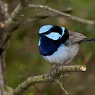 On the twig by smylie