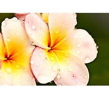 Frangipani Photographic Print