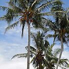 Coconuts on North Mission Beach by STHogan