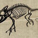 Skeleton  by shandab3ar