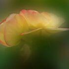 Beguiling Begonia by enchantedImages