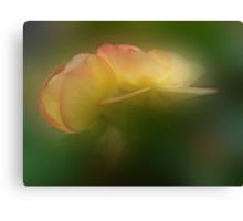 Beguiling Begonia Canvas Print