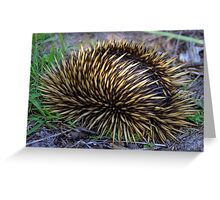 North Head Manly - Echidna in hiding Greeting Card