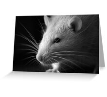 Black and White Rat Greeting Card