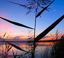 Through the Weeds by Tracey Phillips