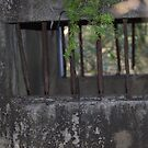 North Head Manly - Bars of a Army holding cell by miroslava