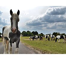 """I'm sorry, this is a """"horse only"""" function Photographic Print"""