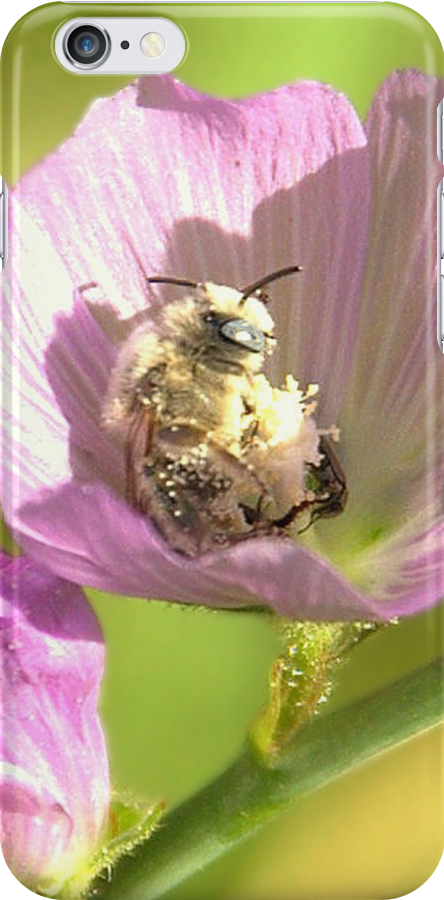 A White Bee in Pollen With A Face by K D Graves Photography