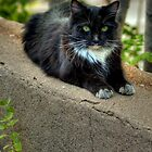 """ Kitty On The Curb"" by Diana Graves Photography"