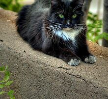 """"""" Kitty On The Curb"""" by Diana Graves Photography"""