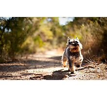 runnin' dog Photographic Print