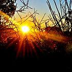 Sunrise in Sedona by Ellen Rosen Singer