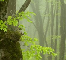 Strong Fog in the Beech Forest. Sticker
