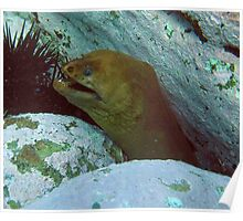 Long Neck-Green Moray Eel Poster