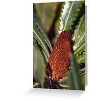 North Head Manly - Banksia Greeting Card