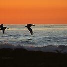 BEACH DAYS by fsmitchellphoto