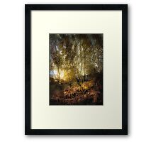 Silver Birch Framed Print