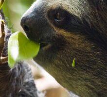 Furry Sloth Sticker