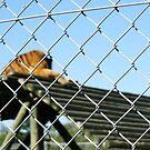 Caged by Roxanne du Preez