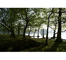View Through the Woods Photographic Print