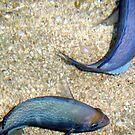 Fish by JenniferLouise