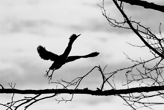 Green Heron Silhouette  by Tom Talbott