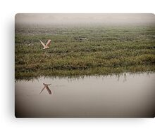 Flight of the Spoonbill Canvas Print