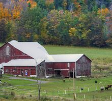 Pennsylvania Barn In The Fall by Gene Walls