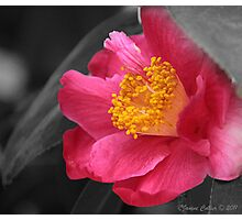 """"""" Selective Colouring """" - 1 Photographic Print"""