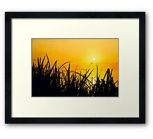 Sunrise through the reeds Framed Print