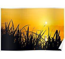 Sunrise through the reeds Poster