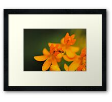 Love and Affinity Framed Print