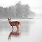 Deer - Selective Colour - Dunrobin Ontario by Debbie Pinard
