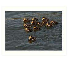 12 Ducklings Art Print