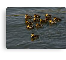 12 Ducklings Canvas Print
