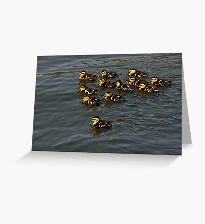 12 Ducklings Greeting Card