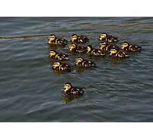 12 Ducklings Photographic Print