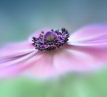 Anemone by Lyn Evans