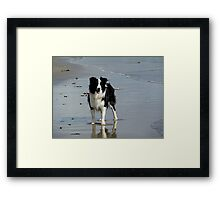 OLLIE'S DAY AT THE BEACH........! Framed Print