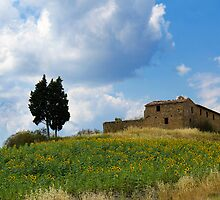 Tuscan landscape. Farmstead with sunflowers by capellincolti