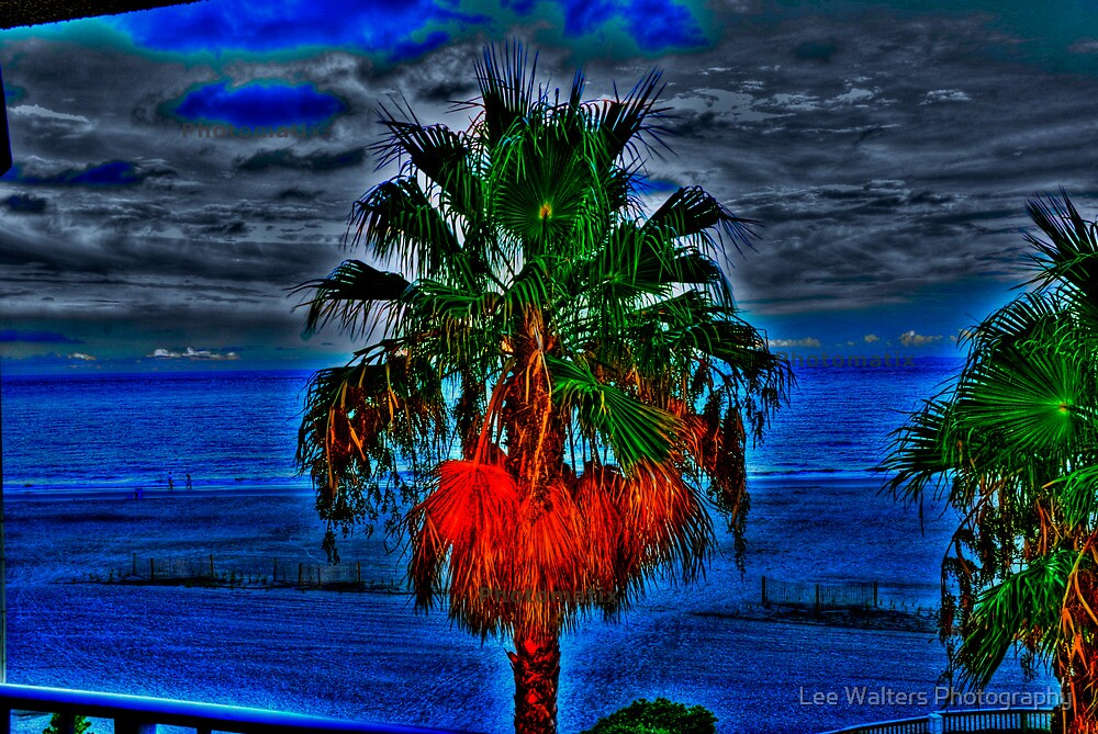 Blue Palm Tree by Lee Walters Photography