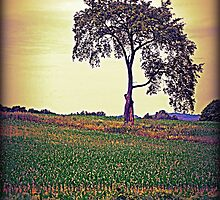One Tree by MissDawnM
