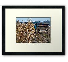 Amish Man picking corn Framed Print