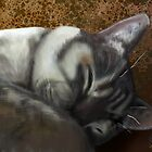 Kitty nap by Palomar78