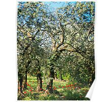 Olive trees and the poppies in Provence France Poster