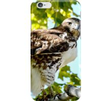 Colorado Red Tailed Hawk iPhone Case/Skin