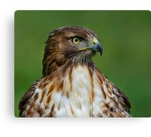 Profile of a Red Tailed Hawk Canvas Print