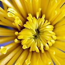 Yellow Burst by Linda  Makiej